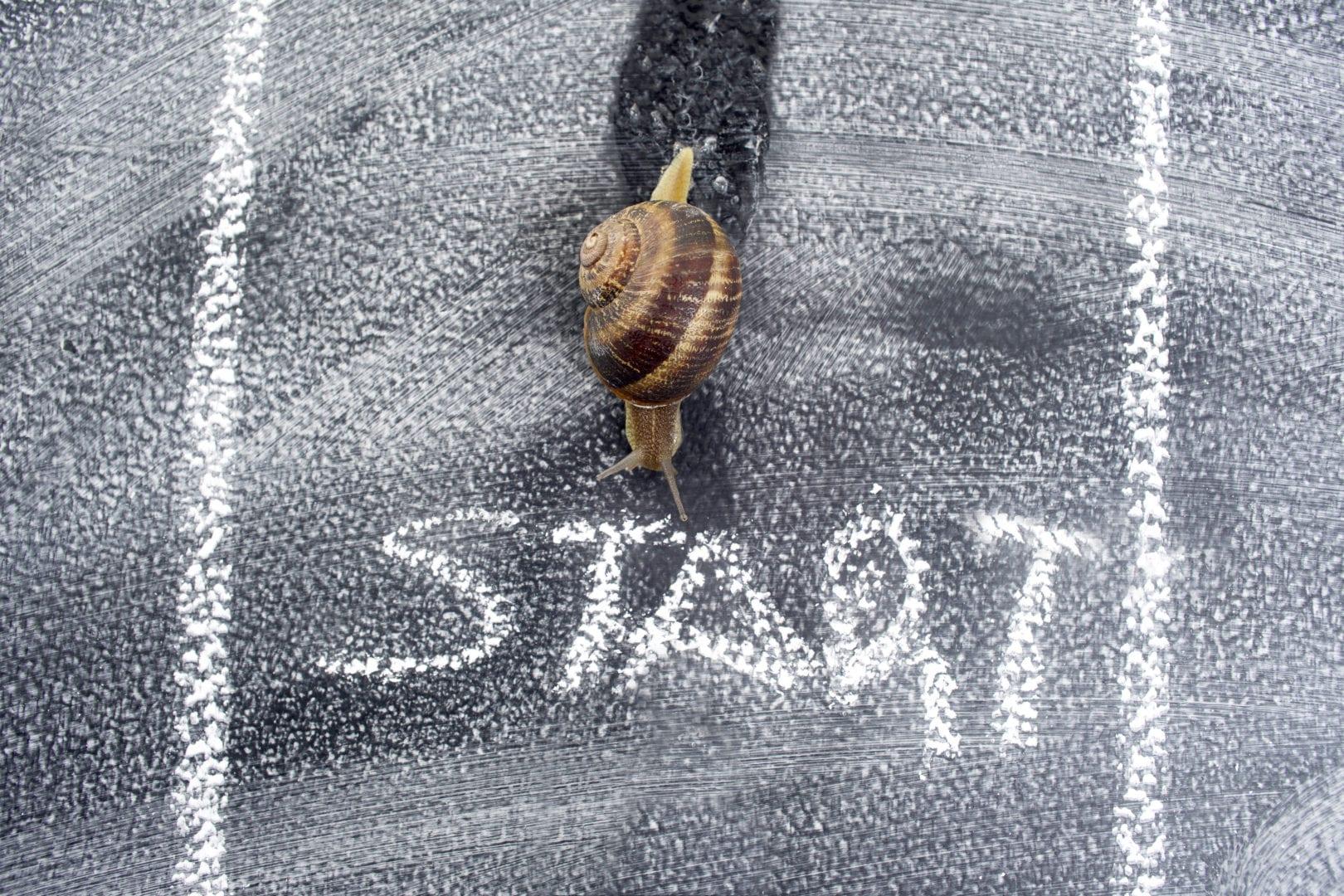 Snail on chalkboard